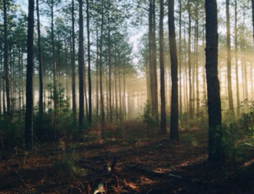 Gevorderden training systemisch werk in de natuur