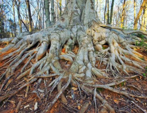 Basistraining systemisch werk in de natuur